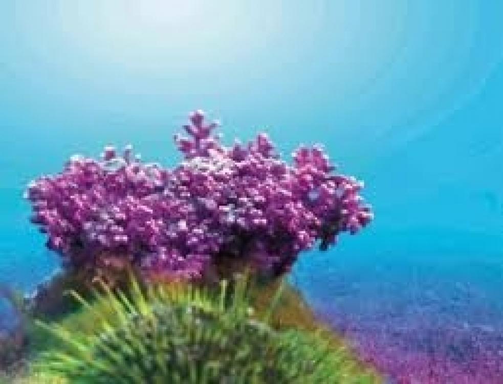 Jūros mineralai - Almi-special