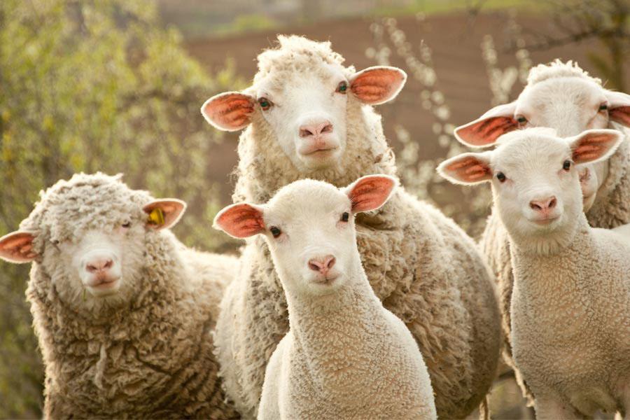 Produktai avims