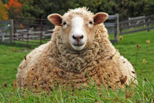 Jūsų avims – kokybiški ir ūkininkų įvertinti produktai
